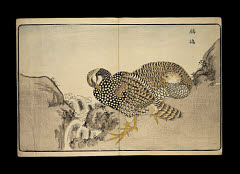 00035337001